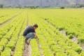 AMBIENTE: Ricambio generazionale, premio da 70mila euro per i giovani in agricoltura