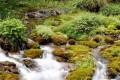 AMBIENTE: Allarme pesticidi, presenti nel 64% delle acque italiane